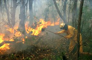 Firefighter and flaming undergrowth