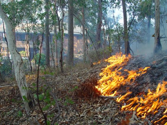 An iPhone app is being used to help people prepare for bushfire