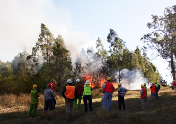 Burning under eucalypts seminar in the field