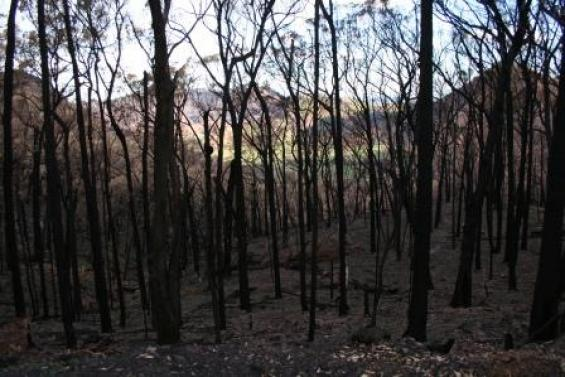 Community research is underway in NSW following the October 2013 bushfires