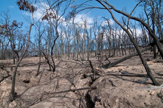 Fire Australia examines Royal Commission