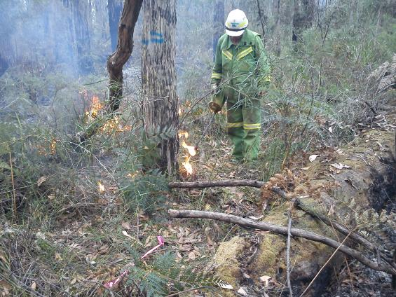 A prescribed burn in Victoria's Otway Ranges