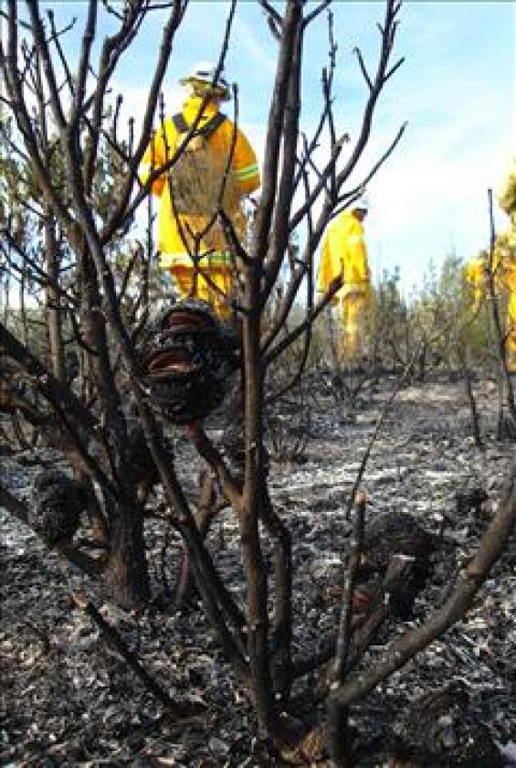 Firefighters and burnt banksia