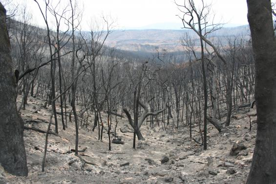 Research has helped measure erosion following bushfires