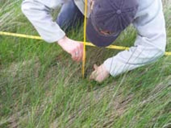 Grassland curing under scrutiny