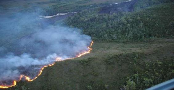 Prescribed burning to reduce fire risk