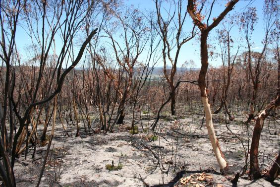 Research has been released following the Oct 2013 NSW bushfires