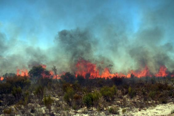 Fire behaviour research at Ngarkat Conservation Park