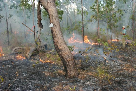 Research findings from mapping fire severity in tropical northern Australia