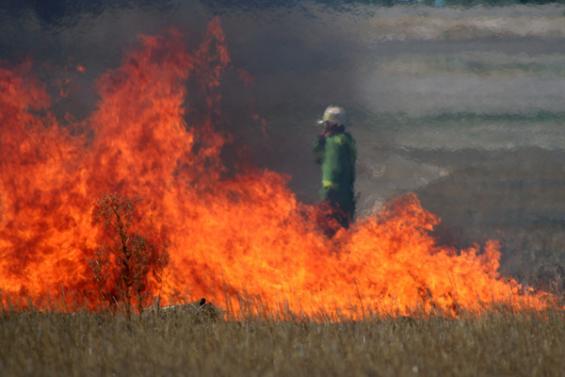 Shelford grassfire