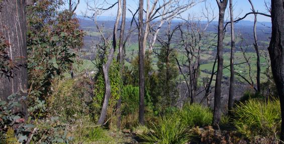 The Bushfire and Natural Hazards CRC research program is taking shape