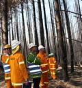 Bushfire research taskforce